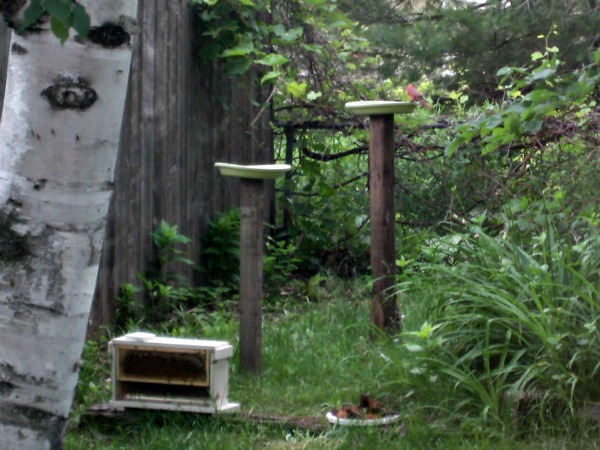 My Backyard Bees Are In This Tiny House