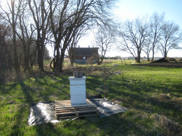 #farmherlife, #Iowa, #honey bees