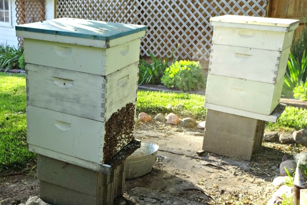bee hives at charlie's house