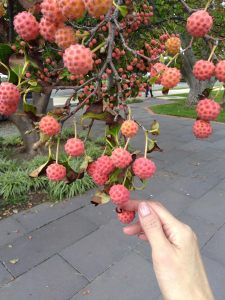 fruit on tree on Capitol grounds