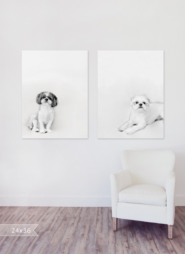large black and white prints of two shihtzu dogs above a off-white chair, one shihtzu is white and the other is black and white