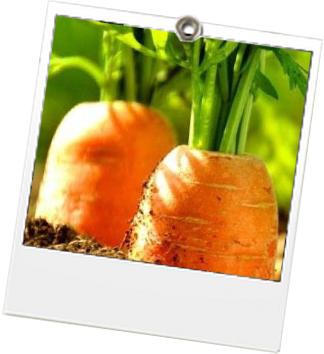 6 - carrotmob
