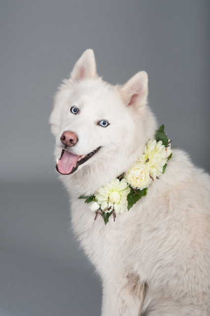 dog_wearing_flower_collar
