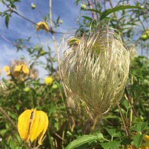 online_flower_arranging_class photography tips