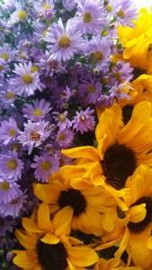colour_wheel-blue-and-orange-flowers