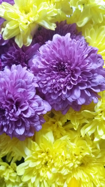 colour_wheel-purple-and-yellow-flowers