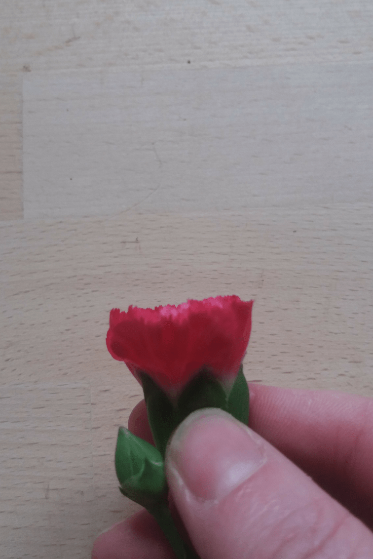 how to get spray carnations to open
