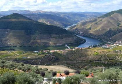 View of Douro River and vineyards from Casal de Loivos, Douro Valley, Portugal