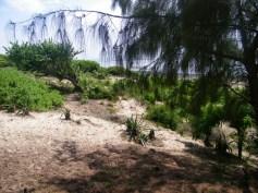 tree to sea