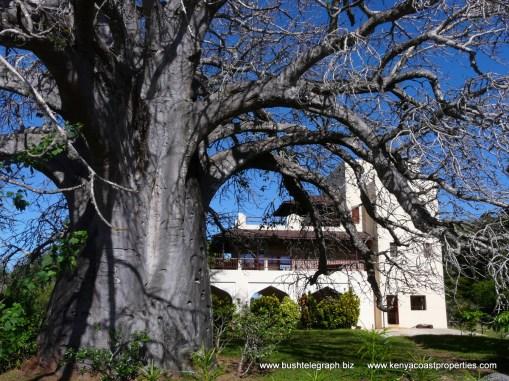 Baobab and house1