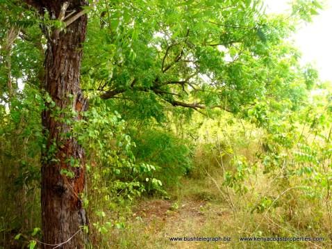 Kilifi Creek plot3