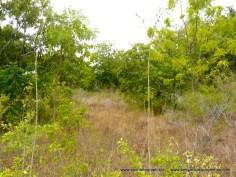 Kilifi Creek plot5