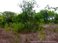 Kilifi Creek plot8