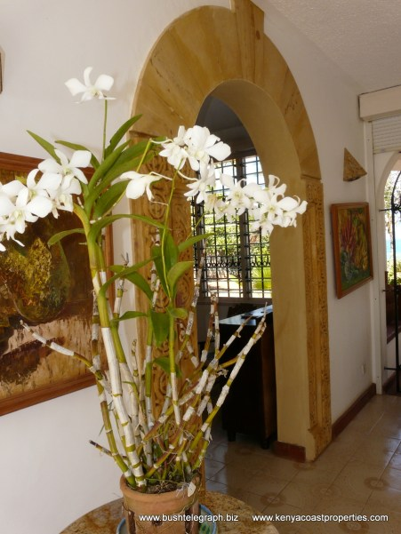 orchids and arch
