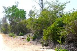 diani-beach-plot3