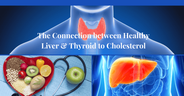 What the Health of your Liver and Thyroid have to do with Healthy Cholesterol levels.