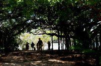 Botanic Gardens Brisbane