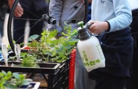 Child spraying the plants