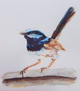 Superb Blue Wren Painting Upper North Shore Sydney Commissions