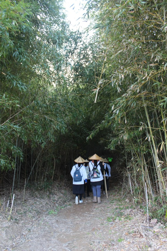 Entering a small forest of bamboo trees.