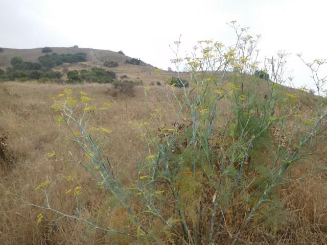 baldwin hills scenic overlook_1