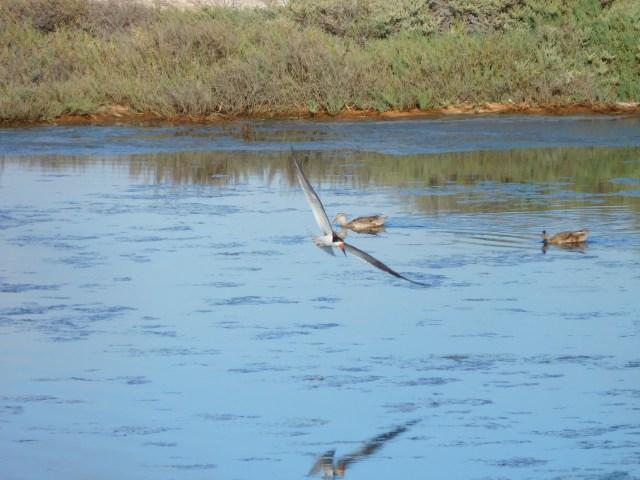 Bolsa Chica Ecological Reserve 2