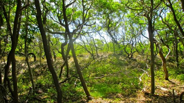 sunken forest 8