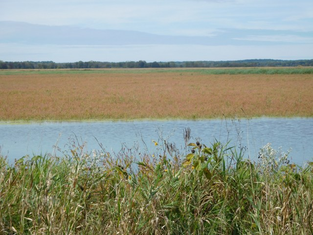 montezuma national wildlife refuge 17