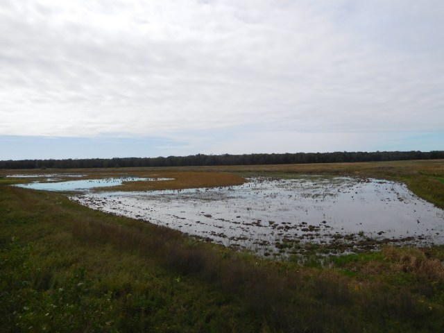 montezuma national wildlife refuge 3