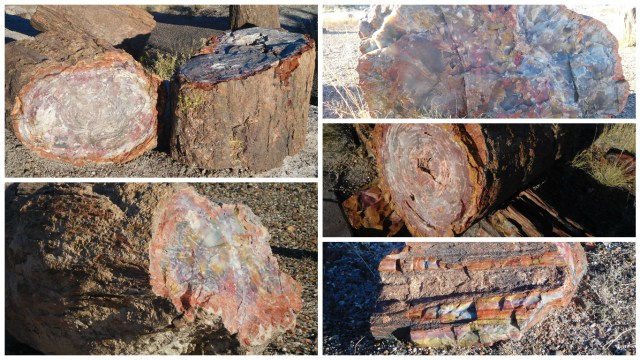 petrified_wood_