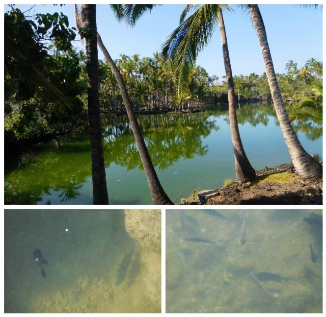 mauna_lani_fish_pond_1