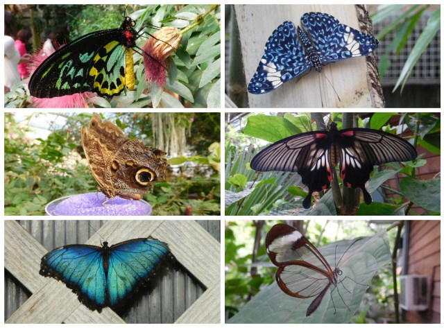Magic_Wings_Butterfly_Conservatory_8