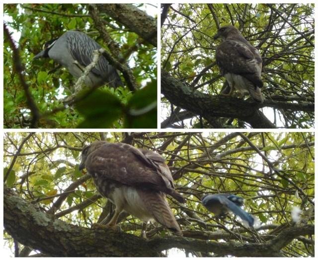 charleston_birding