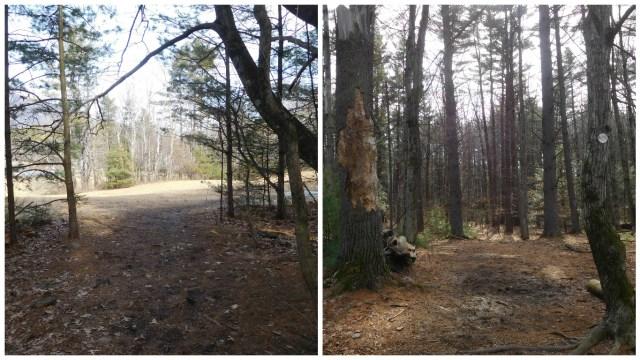 comeau_trail_woodstock_