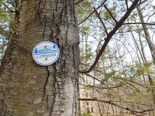 comeau_trail_woodstock_5