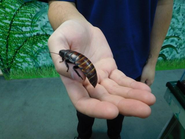 insectarium_philadelphia_1