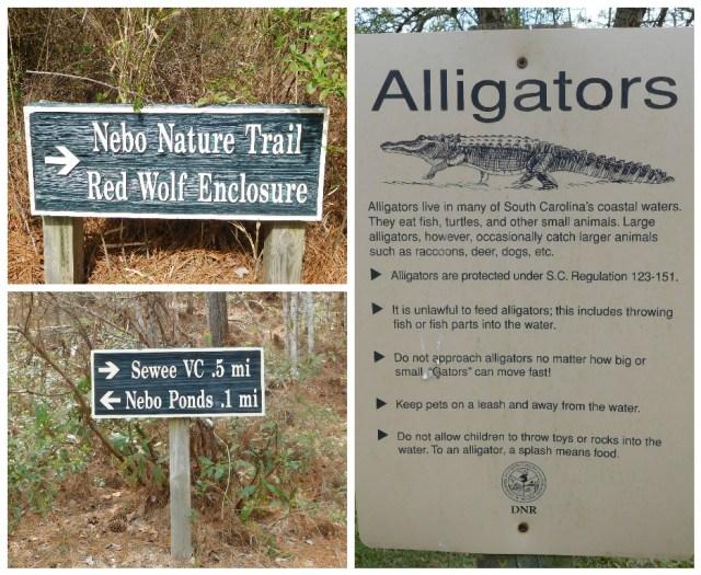 nebo_nature_trail_charleston