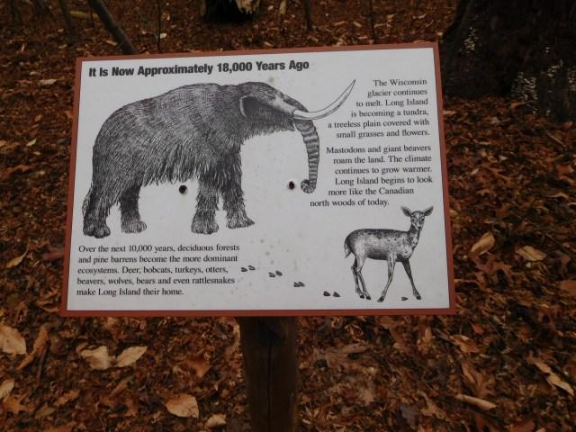 Bailey_Arboretum_6