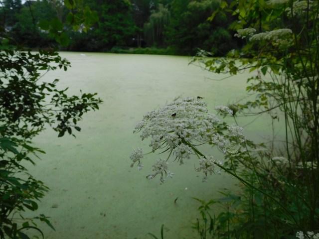 Bailey_Arboretum_locust_valley_1