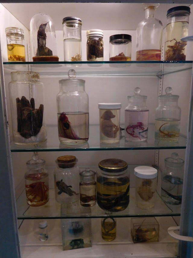 morbid_anatomy_museum