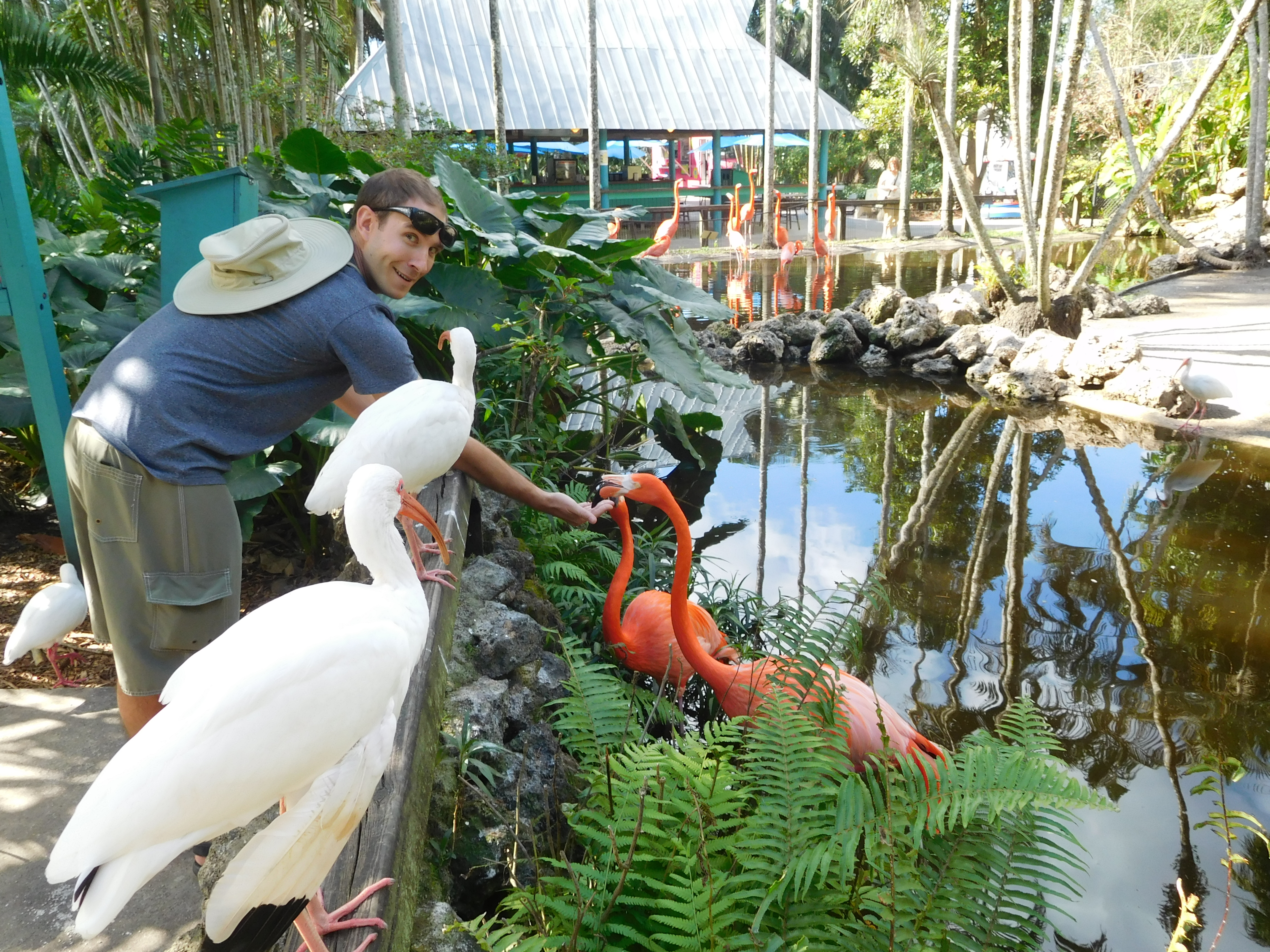 Visit Davie, Florida for flamingos, PhenNOMeNOM, and hiking! | Julie ...