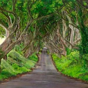 Dark Hedges | Oil on Canvas by Julie Lovelock