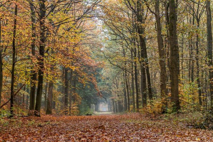path surrounded by trees and falling leaves in autumn