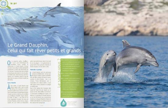 Grand dauphin, Julien Amic, Parc national des Calanques