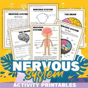 Nervous System Printable Activities
