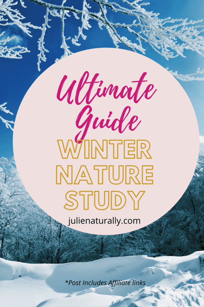 winter nature study ideas in the forest with snowy trees