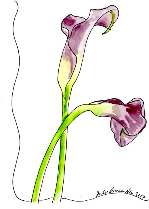 Julie Neu watercolor painting of purple calla lilies