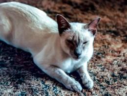 My Cat Nougat I got when I was 16