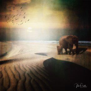 JuliePowell_Elephants on dunes at Sunset