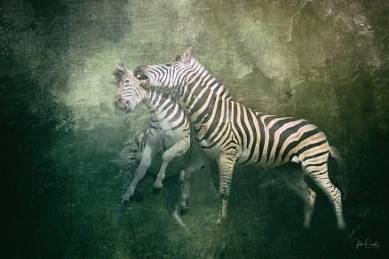 JuliePowell_Zebras
